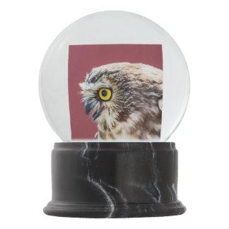 Northern Saw-Whet Owl Portrait Snow Globe