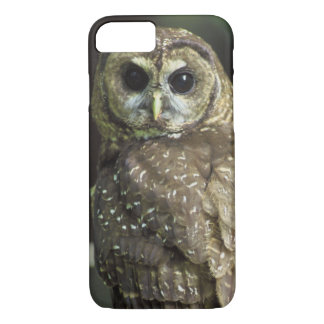 Northern Spotted Owl iPhone 7 Case