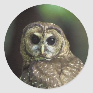 Northern Spotted Owl Sticker