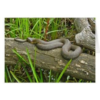 Northern Water Snake Basking on Log Multiple Items Card
