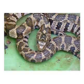 Northern Water Snake Postcard. Postcard