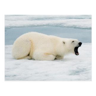 Norway, Svalbard Archipelago, Spitsbergen 3 Postcard