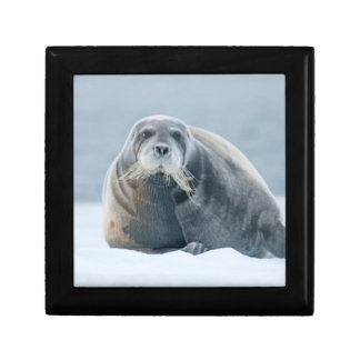 Norway, Svalbard Archipelago, Spitsbergen 4 Gift Box