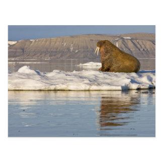 Norway, Svalbard, Edgeoya Island, Walrus Postcard