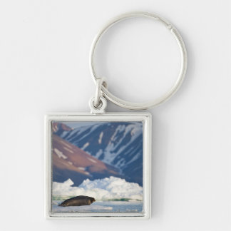 Norway, Svalbard, Spitsbergen Island, Bearded 2 Silver-Colored Square Keychain