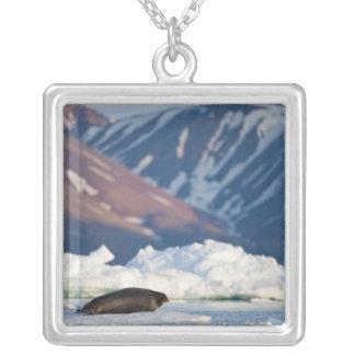 Norway, Svalbard, Spitsbergen Island, Bearded 2 Square Pendant Necklace