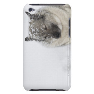 Norwegian Elkhound iPod Touch Covers