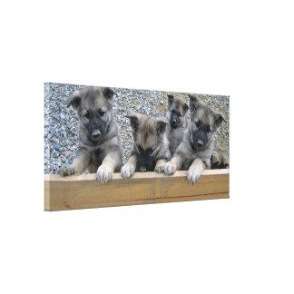 Norwegian Elkhound Puppies Canvas Print