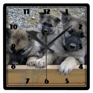 Norwegian Elkhound Puppies Square Wallclock