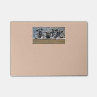 Norwegian Elkhound Puppies Post-it® Notes