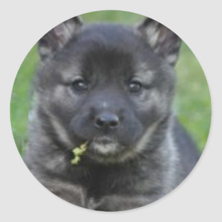 Norwegian Elkhound Puppy Round Sticker