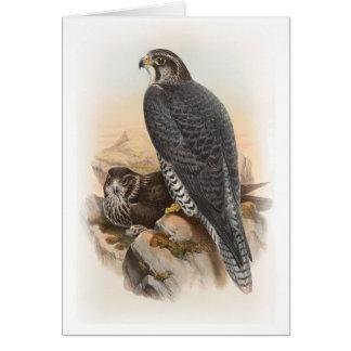 Norwegian Falcon John Gould Birds of Great Britain Card