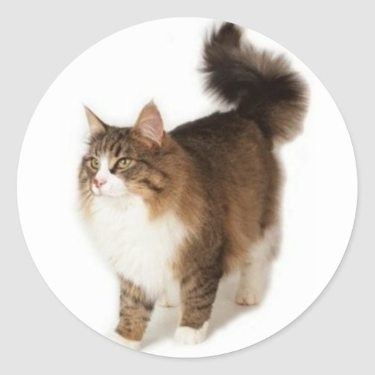 Norwegian Forest Cat Classic Round Sticker