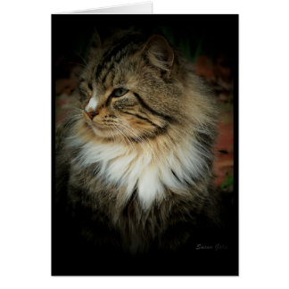Norwegian Forest Cat Missing You Card