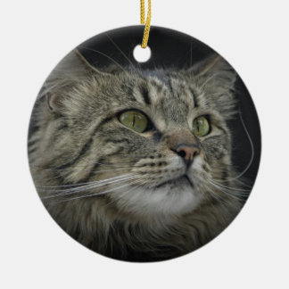 Norwegian Forest cat portrait Ceramic Ornament