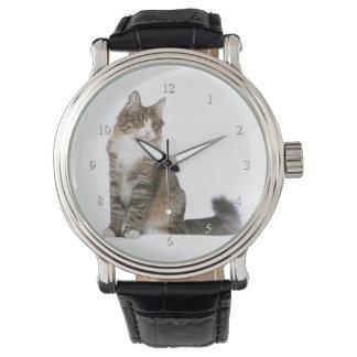Norwegian Forest Cat Watch