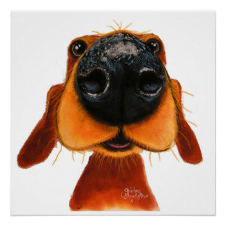 Nosey Dog 'Nosey Nando' Poster Print Perfect Poster