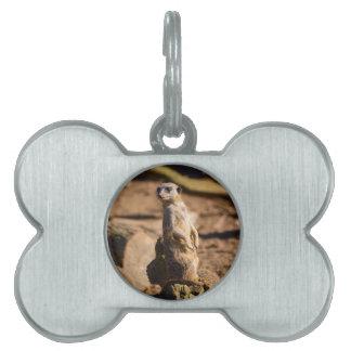 nosey meerkat pet ID tag