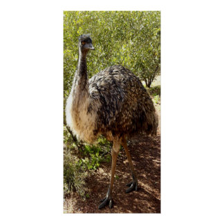 Nosy Emu Poster