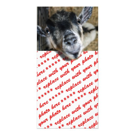 Nosy Goat Looking Out Custom Photo Card
