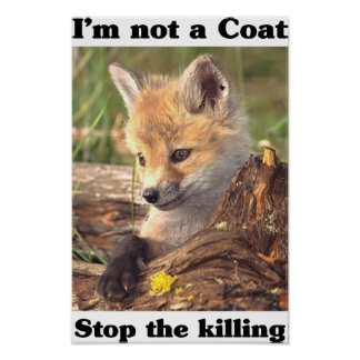 Not A Coat-Fox Poster