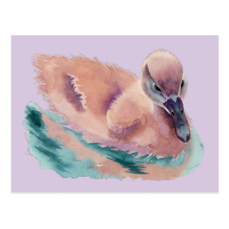 """""""Not an Ugly Duckling"""" Postcard"""