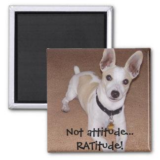 Not attitude... RATitude! Magnet