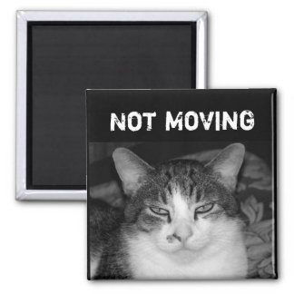 """Not Moving"" Crabby Cat Magnet"