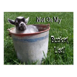 Not On My Bucket List! Goat in a Bucket Postcard