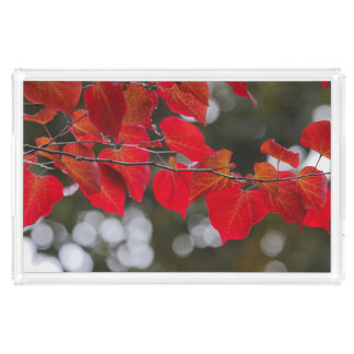 Not Too Christmas-y Red Leaves Photograph Acrylic Tray