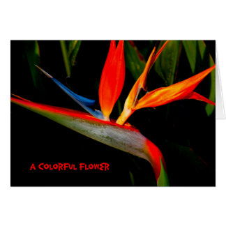 Note Card Colorful Bird of Paradise