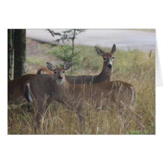 Note Card - Deer - Curious Pair