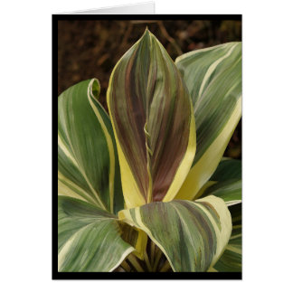 Note card of Ti plant with artistic filter