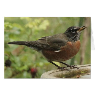 Note Card with American Robin