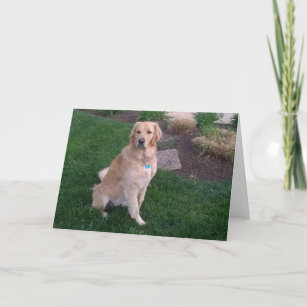 Note Card With Golden Retriever Jake