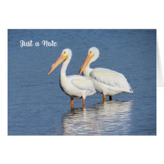 Note Card with White Pelicans