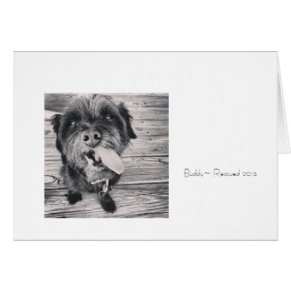 Note Cards, Dog Art, Rescue Note Card