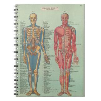 Notebook - Anatomy