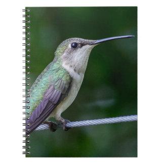 Notebook - Blue and Green Hummingbird Photo