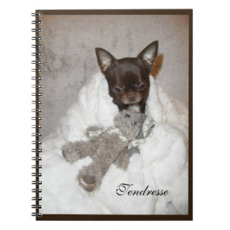 notebook photo pup maroon chihuahua becomes fluffy