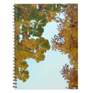 Notebook Photographs Autumn in Madrid