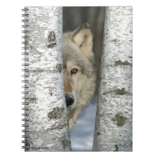 notebook with pic of gray wolf in birch trees