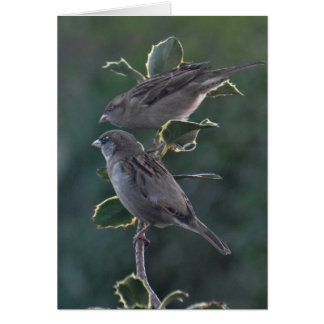 Notecard: Betty & Ian's House Sparrows Card