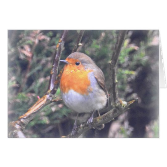 Notecard: British Robin Card