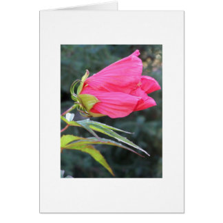 Notecard with brilliant red flower