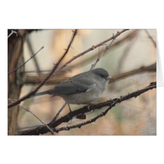 Notecard with Junco