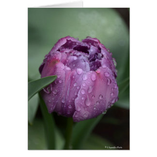 Notecard with purple tulip