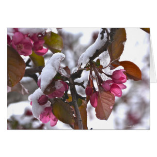 Notecard with Snow on Crab Apple Blossom