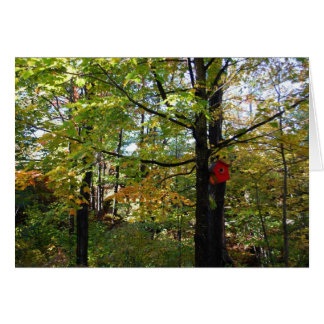 Nothern Orntario autumn forest Card
