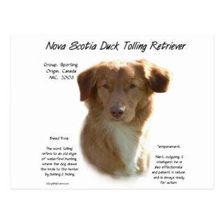 Nova Scotia Duck Tolling Retriever History Design Postcard